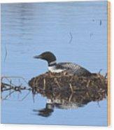 Loon On Nest Wood Print
