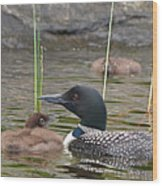 Loon Time Wood Print by Peter Gray