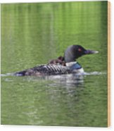 Loon With Chick On Back Wood Print