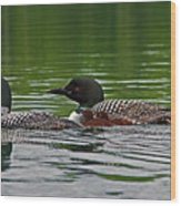 Loons With Chicks Wood Print