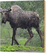 Loose Moose Wood Print