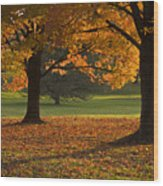 Loose Park Maple Trees Wood Print by Chad Davis
