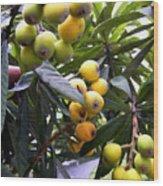 Loquat Exotic Tropical Fruit  2 Wood Print