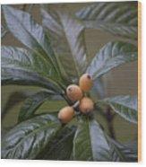 Loquat Fruit Wood Print