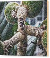 Loquat Man Photo Wood Print