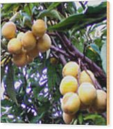 Loquats In The Tree 1 Wood Print