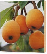 Loquats In The Tree 2 Wood Print