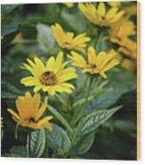 Loraine Sunshine 2 Wood Print