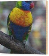 Lorikeet Parrot  Wood Print