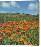 Los Olivos Poppies Wood Print