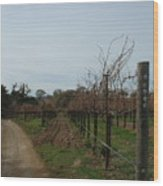 Los Olivos Vineyard Wood Print