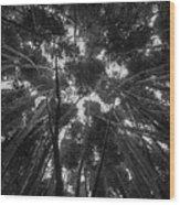 Lost Among The Bamboo Wood Print