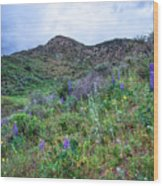 Lost Canyon Wildflowers Wood Print