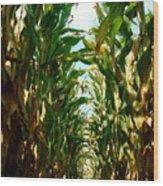 Lost In Corn Wood Print