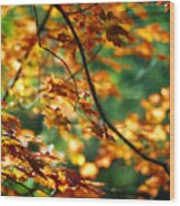 Lost In Leaves Wood Print