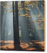 Lost In The Light Wood Print
