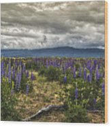 Lost In The Lupine Wood Print