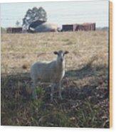 Lost Lamb Wood Print