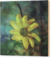 Lost Wild Flower In The Shadows 5771 Ldp_2 Wood Print