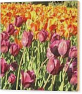 Lots Of Tulips Wood Print