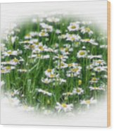 Lotsa Daisies Wood Print