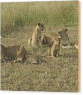 Lotsa Lions Wood Print