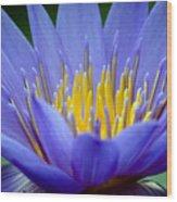 Lotus 6 Wood Print