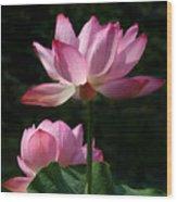 Lotus Beauties--upstaged Dl048 Wood Print