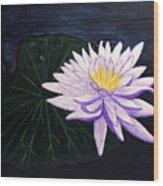 Lotus Blossom At Night Wood Print