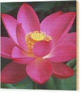 Lotus Blossom Wood Print by Elvira Butler