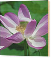 Lotus--center Of Being--protective Covering I Dl0087 Wood Print