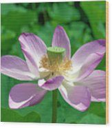 Lotus--fading IIi Dl0081 Wood Print