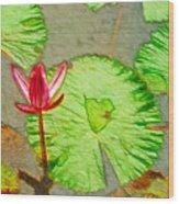 Lotus Flower Bloom In Pink 1 Wood Print