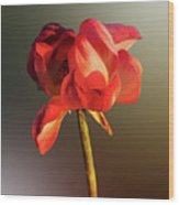 Lotus Flower Golden Glow Wood Print