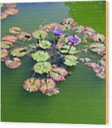 Lotus Flowers #4 Wood Print
