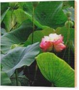 Lotus Forms Wood Print