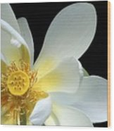 Lotus From Above Wood Print