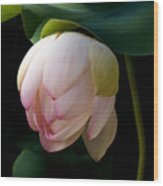 Lotus In The Evening  Wood Print