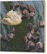 Lotus In The Lake Wood Print