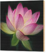 Lotus In The Limelight Wood Print