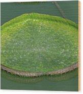 Lotus Leaf In The Marsh Wood Print