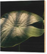 Lotus Leaves Morning  Shower Wood Print