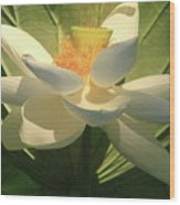 Lotus Light Wood Print