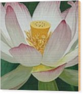 Lotus Of Awakening Wood Print