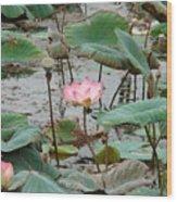Lotus Pond -2 Wood Print