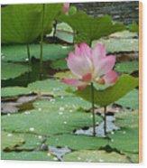 Lotus Pond #3 Wood Print