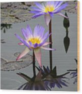 Lotus Reflection 4 Wood Print