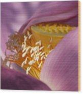Lotus Seed Pod Wood Print