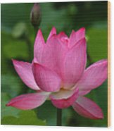 Lotus--shades Of Past And Future Dl029 Wood Print by Gerry Gantt