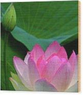 Lotus Siblings Wood Print